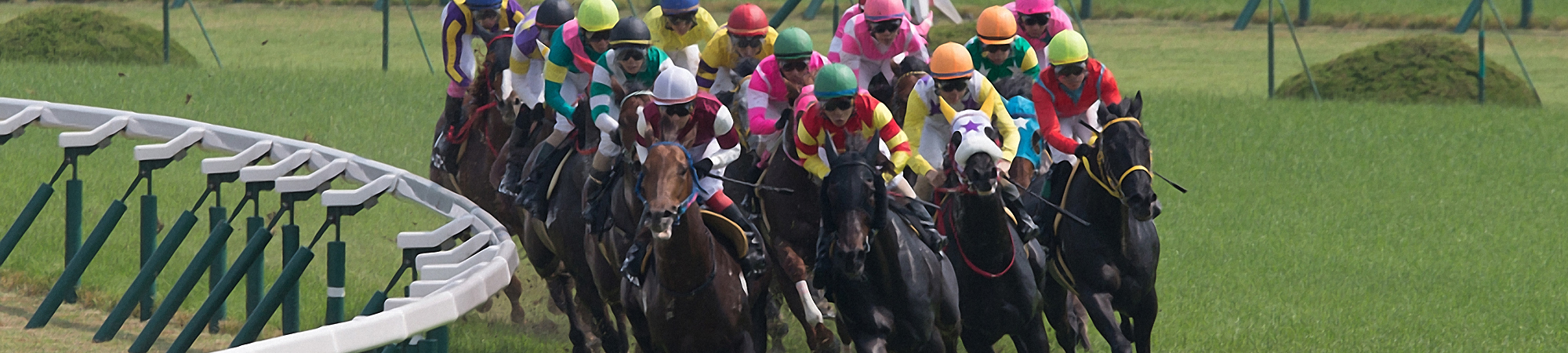 racehorse_1